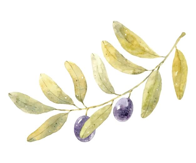 Akwarela gałązka oliwna