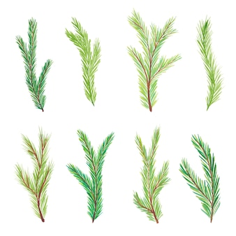 Akwarela gałęzie jodły. gałęzie drzew. ręcznie rysowane akwarela gałęzie jodły na białym tle