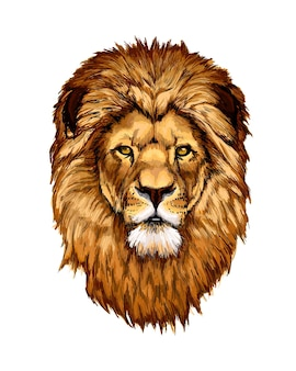 Akwarela głowa lwa portret na białym tle