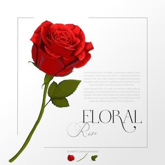 Akwarela ilustracja kwiat czerwonej róży
