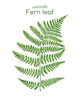 Akwarela ilustracja liść paproci