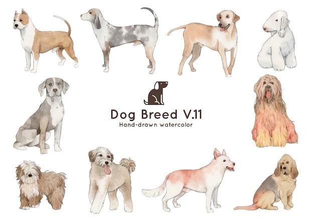 Akwarela ilustracja rasy psów