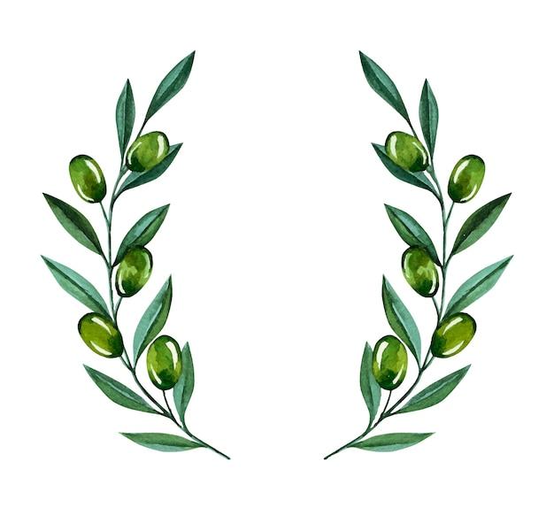 Akwarela ilustracja z gałązkami oliwnymi i jagodami. kwiatowa ilustracja na ślub stacjonarne, pozdrowienia, tapety, modę i zaproszenia.