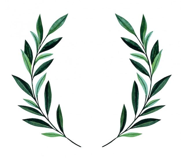 Akwarela ilustracja z gałązkami oliwnymi.