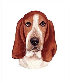 Akwarela ilustracja zabawnego psa. popularna rasa psów. pies. basset hound. ręcznie wykonana postać na białym tle