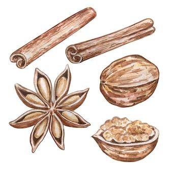 Akwarela ilustracja zestaw przypraw anyżu gwiazdkowatego