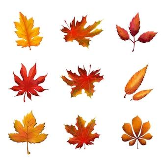 Akwarela jesień kolekcja na białym tle liści wykonana w ciepłych jesiennych kolorach