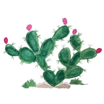 Akwarela kaktus na białym tle. ilustracja wektorowa.