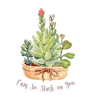 Akwarela kaktusy i sukulenty zestaw z puli.