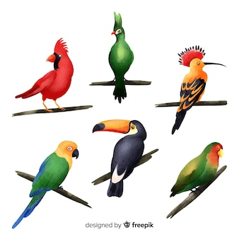 Akwarela kolekcja egzotycznych ptaków