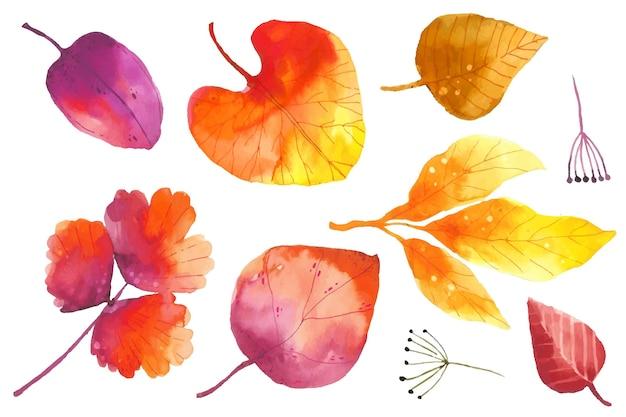 Akwarela kolekcja jesiennych liści