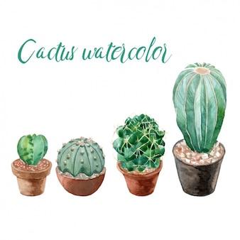 Akwarela kolekcja kaktusów