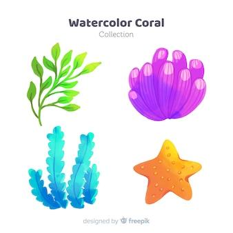 Akwarela kolekcja koralowców