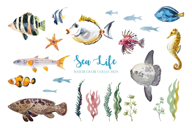 Akwarela, kolekcja ryb morskich i życia morskiego.