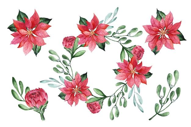 Akwarela kolekcja świątecznych kwiatów