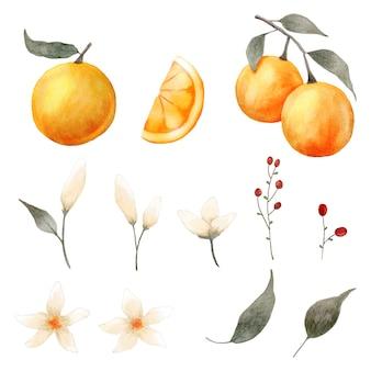 Akwarela kolekcji elementów pomarańczowy