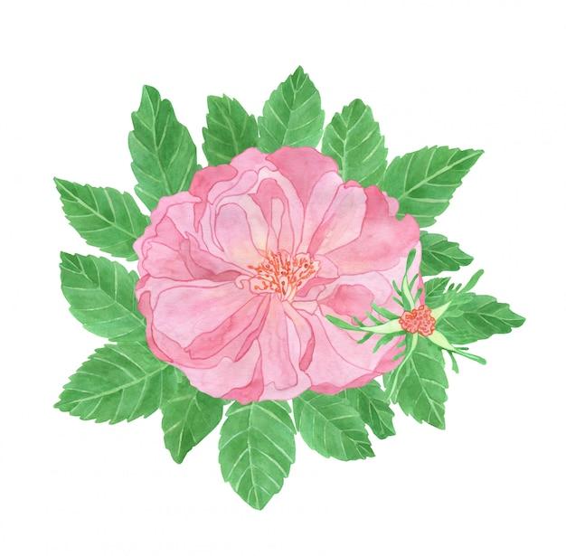 Akwarela kompozycja różowego bukietu dzikiej róży z pączkiem i liśćmi