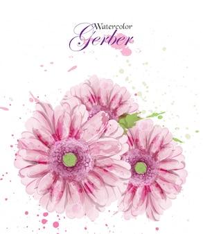 Akwarela kwiat gerber