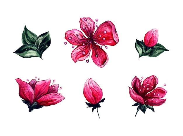 Akwarela kwiatów wiśni