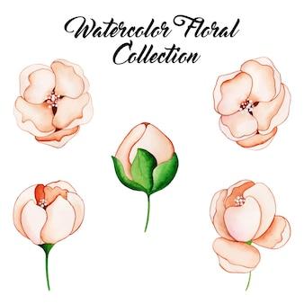 Akwarela kwiatowy kolekcja