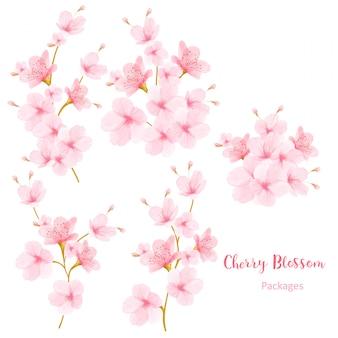 Akwarela kwiatowy wiśniowy kwiat rama wektor