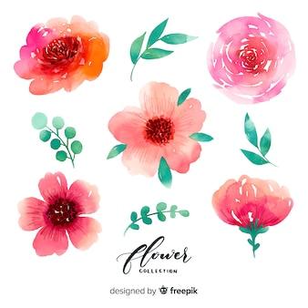 Akwarela kwiaty i liście kolekcji