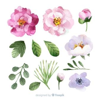 Akwarela kwiaty i liście