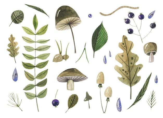 Akwarela las ręcznie rysowane zestaw z liści i jagód.