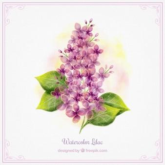 Akwarela liliowy wzór