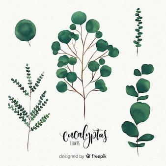 Akwarela liści eukaliptusa
