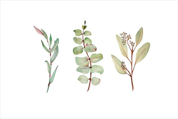 Akwarela liście eukaliptusa i zestaw elementów