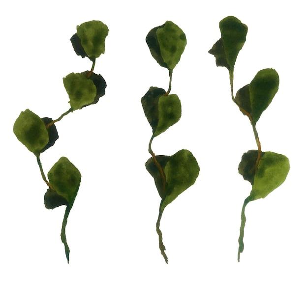 Akwarela liście zestaw na białym tle