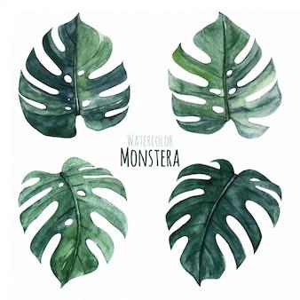 Akwarela monstera leaves