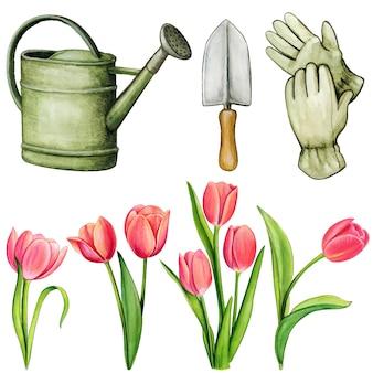 Akwarela narzędzia ogrodnicze i tulipany na białym tle