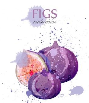 Akwarela owoców figowych