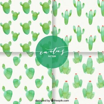 Akwarela pack kaktus wzorców