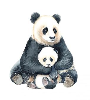 Akwarela panda przytulić dziecko panda ilustracja.