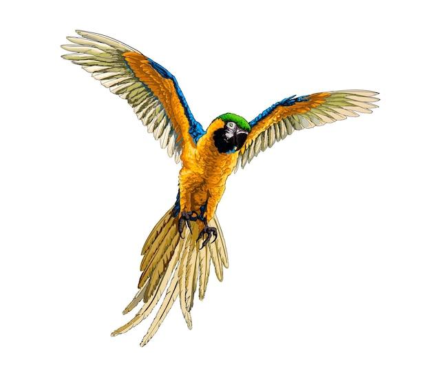 Akwarela papuga ara na białym tle