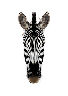 Akwarela portret głowy zebry na białym