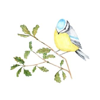 Akwarela ptak bluetit siedzi na gałęzi, na białym tle. tomtit ptak akwarela ilustracja. jesień - zimowy ptak