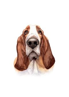 Akwarela ręcznie malowany pies basset hound