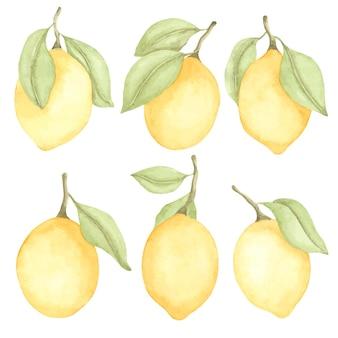 Akwarela ręcznie rysowane zestaw z cytrynami i zielonymi liśćmi