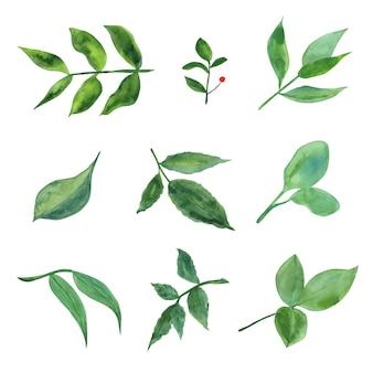 Akwarela roślin i liści. ilustracja botaniki.