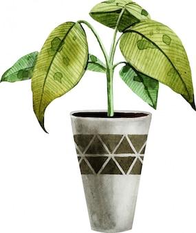 Akwarela rośliny doniczkowe na białym tle.