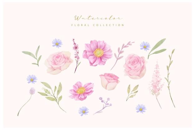 Akwarela róże i kolekcja kwiatów anemonowych