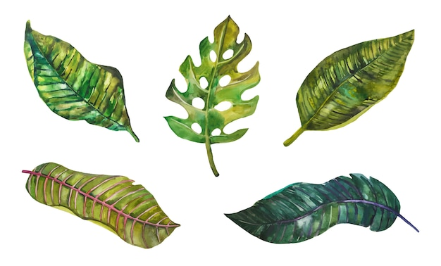 Akwarela różnych tropikalnych zielonych liści.