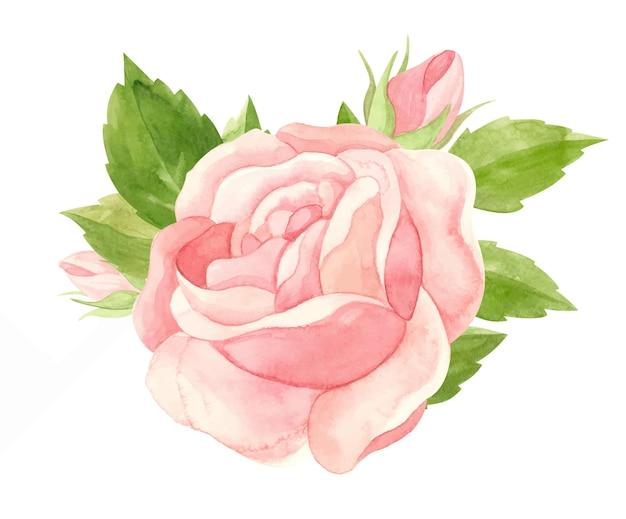 Akwarela różowa róża kwiatowa akwarela