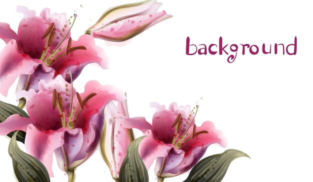 Akwarela różowe kwiaty lilii