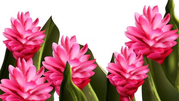 Akwarela różowy kwiat imbiru zwrotnik