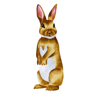 Akwarela słodki królik